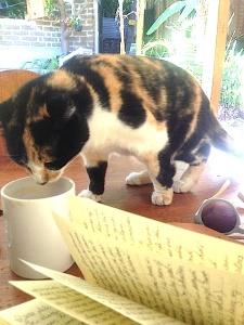 Cat Coffee Guat